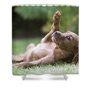 Irish Setter Puppy Shower Curtain