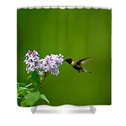 Irridescent Charmer Shower Curtain