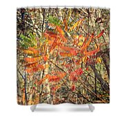 Is It Live Or Is It Memorex Shower Curtain by Frozen in Time Fine Art Photography