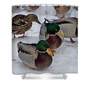 Isabella's Ducks Shower Curtain
