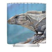 Isla Mujeres Iguana Shower Curtain