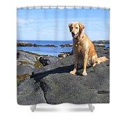 Island Dog Shower Curtain