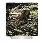 Island Lizards Four Shower Curtain