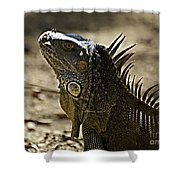 Island Lizards Three Shower Curtain