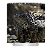 Island Lizards Two Shower Curtain
