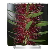 Island Rains Shower Curtain