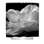Isolated White Tulip Shower Curtain