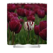 It Is Beautiful Being Different Shower Curtain by Bob Christopher
