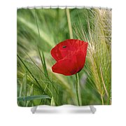 Italian Poppy Shower Curtain