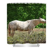 Itchy Horse Shower Curtain