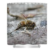 It's A Hard Life Little Bee Shower Curtain