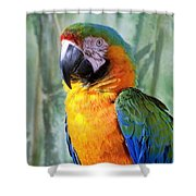 It's A Jolly Good Day Shower Curtain