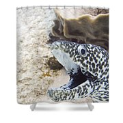 It's A Moray Shower Curtain