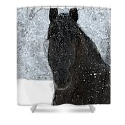 It's Friesian Out Here Shower Curtain