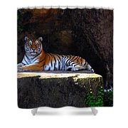 Its Good To Be King Shower Curtain