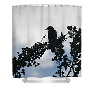 It's Morning Shower Curtain