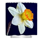 It's Spring - Square Shower Curtain