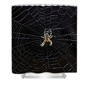 Itsy Bitsy Spider My Ass 2 Shower Curtain
