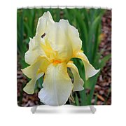 Ivory And White Iris Shower Curtain