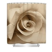 Ivory Brown Rose Flower Shower Curtain