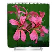 Ivy Geraniums Shower Curtain