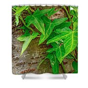 Ivy Wrapped Tree Trunk Shower Curtain
