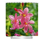 Ixia Flower Shower Curtain