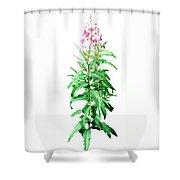 J7136 Shower Curtain