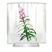 J7138 Shower Curtain