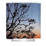 Jacaranda Sunset Shower Curtain by Rona Black