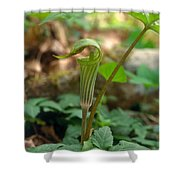 Jack-in-the-pulpit Arisaema Triphyllum Shower Curtain