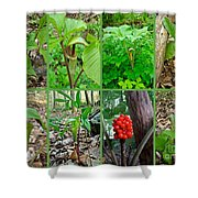 Jack-in-the-pulpit Wildflower    Arisaema Triphyllum Shower Curtain