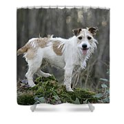 Jack Russell Dog In Autumn Setting Shower Curtain