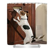 Jack Russell Terrier Gets Paper Shower Curtain