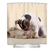 Jack Russell Terrier Puppy And Kitten Shower Curtain