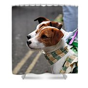 Jack Russell Terriers Shower Curtain