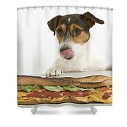 Jack Russell With Sandwich Shower Curtain