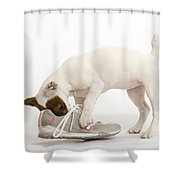 Jack Russell With Sneaker Shower Curtain