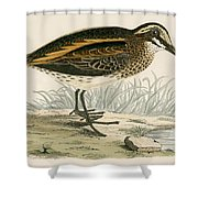 Jack Snipe Shower Curtain