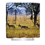 Jackals On Savanna. Safari In Serengeti. Tanzania. Africa Shower Curtain