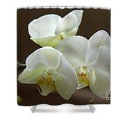 Jack's Orchids Shower Curtain