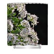 Jade Plant Flowers Shower Curtain