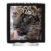 Jaguar-09498 Shower Curtain