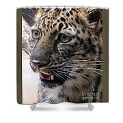 Jaguar-09499 Shower Curtain