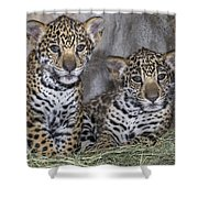 Jaguar Cubs Shower Curtain