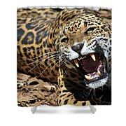 Jaguar Intensity Shower Curtain
