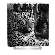 Jaguar Mono Shower Curtain