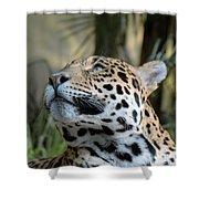 Jaguar Portrait Shower Curtain