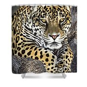 Jaguar Portrait Wildlife Rescue Shower Curtain by Dave Welling