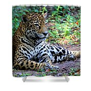Jaguar Resting From Play Shower Curtain
